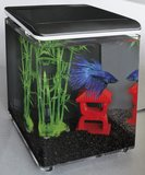 Superfish Home 8_