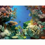 Tetra Poster Shark & Coral_