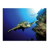 Tetra Poster Turtle & Reef_