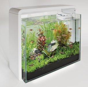 Superfish Home 40